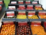 Visit To Tomato World
